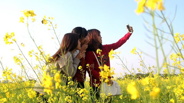 A group of young girls take a wefie among the yellow flowers.