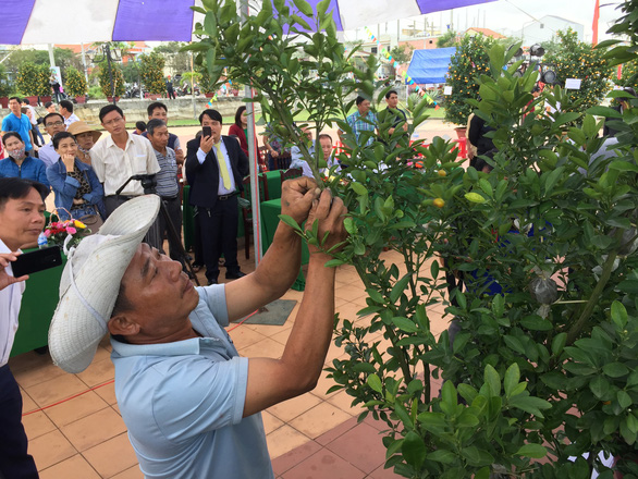Watch kumquat-shaping competition in Hoi An