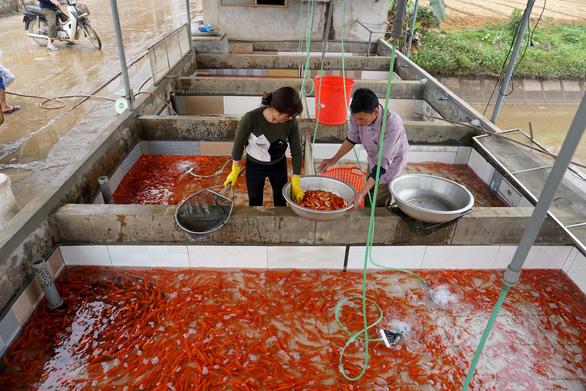 In Vietnam, red carp village bustling ahead of Kitchen Gods' Day