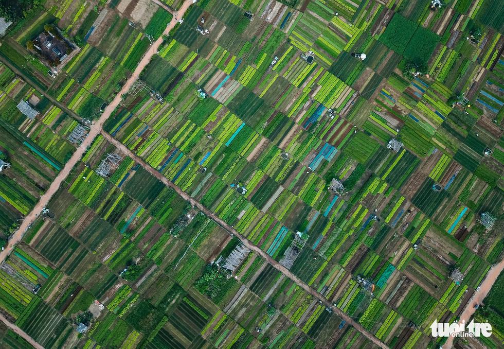Tra Que veggie village a green gem of Hoi An