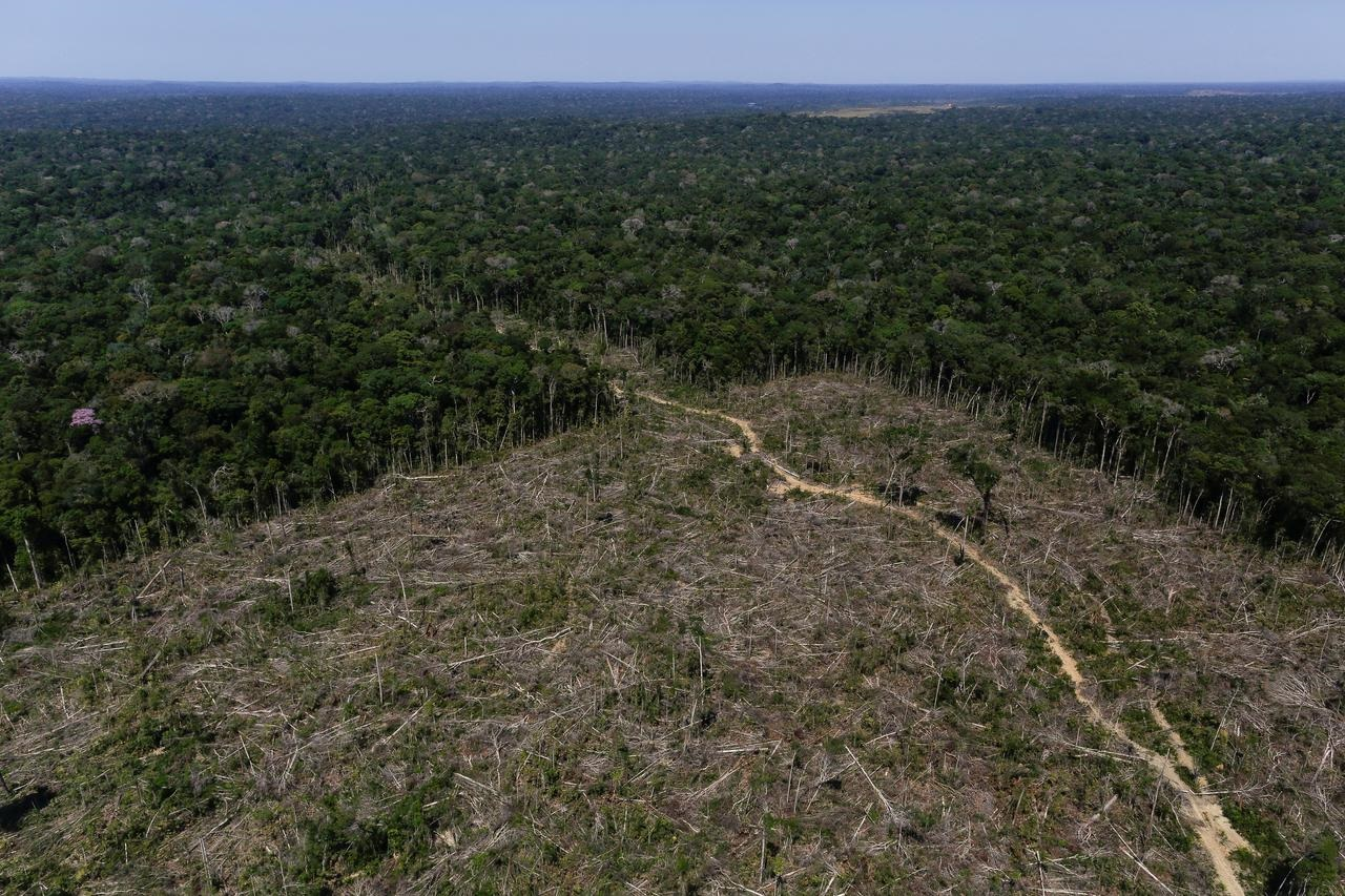 Most big companies fail to report role in deforestation, charity says