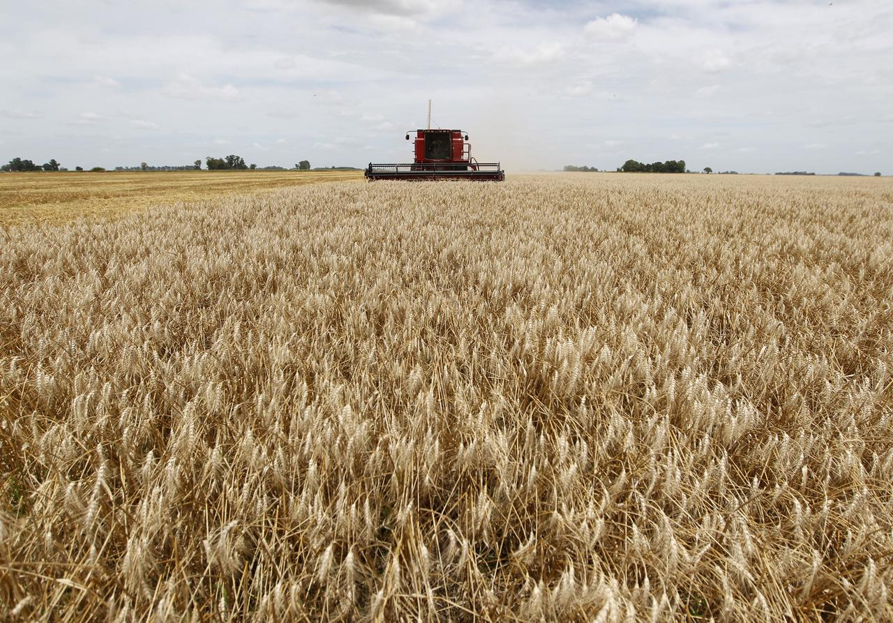 Argentina ready to fill Vietnam's wheat supply gap: export chamber