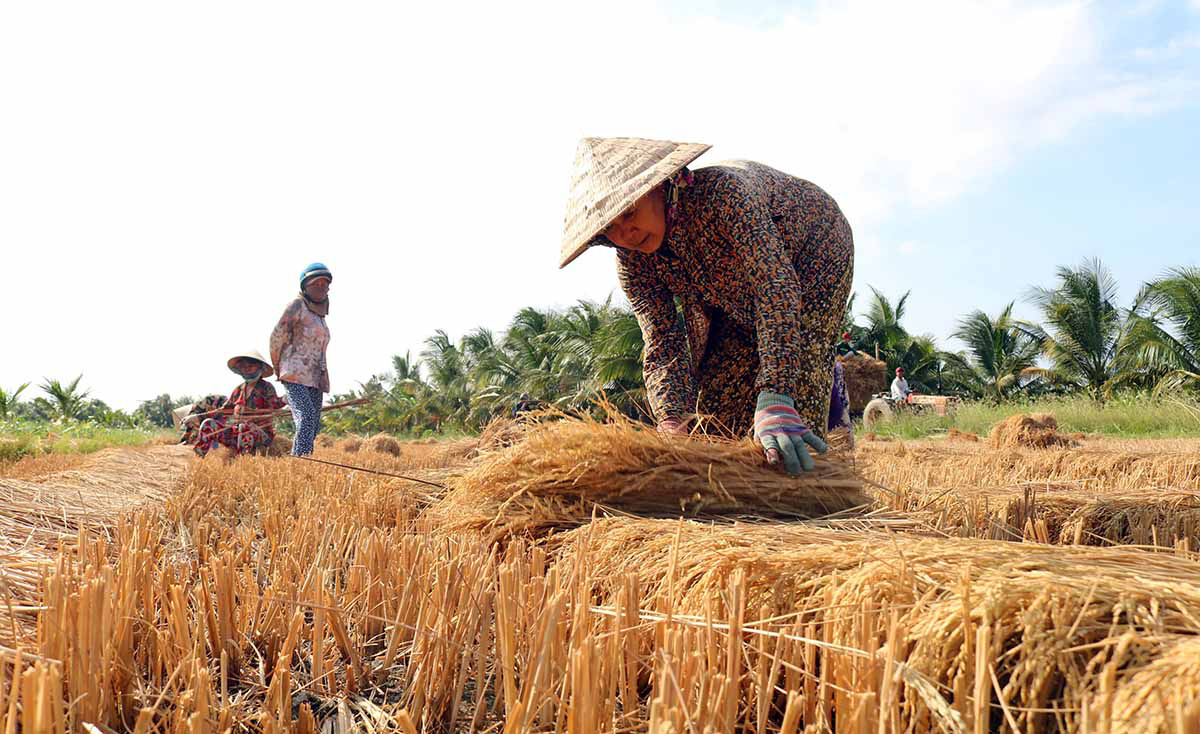 Vietnam's Mekong provinces declare state of emergency amid record drought, saltwater intrusion