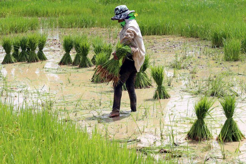 Asia Rice — Thai prices dip as demand flows to India, Vietnam