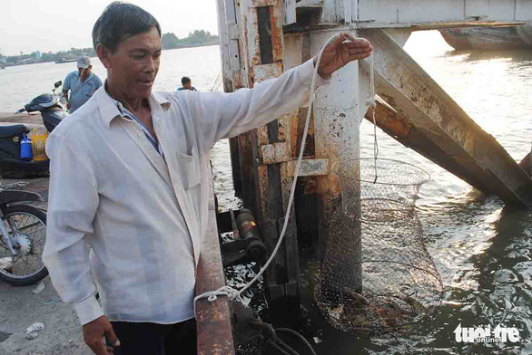 Tran Van Thoi pulls in some enmeshed tom cang xanh (giant freshwater prawn) on Vam Cong water in Vietnam's Mekong Delta. Photo: Thanh Nhon / Tuoi Tre