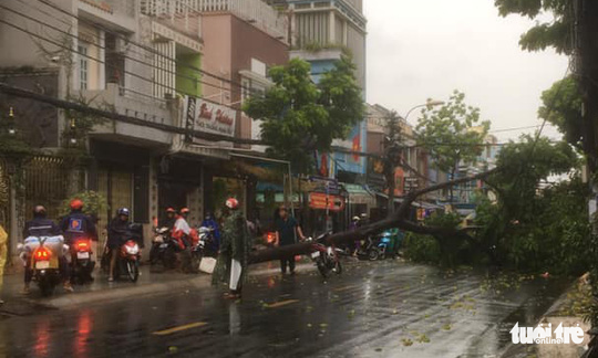 An uprooted tree in District 8 Ho Chi Minh City, May 30, 2020. Photo: Tuoi Tre Contributor