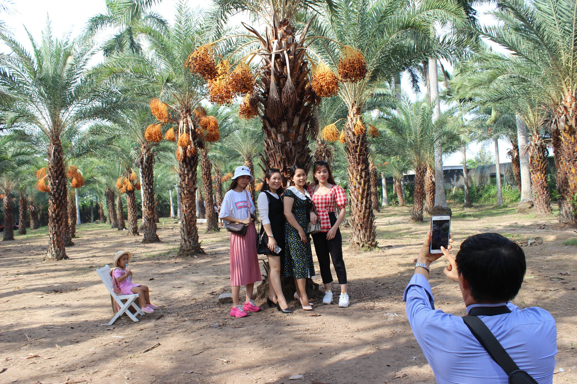 Date palm garden emerges as new photo hotspot in Vietnam's Mekong Delta