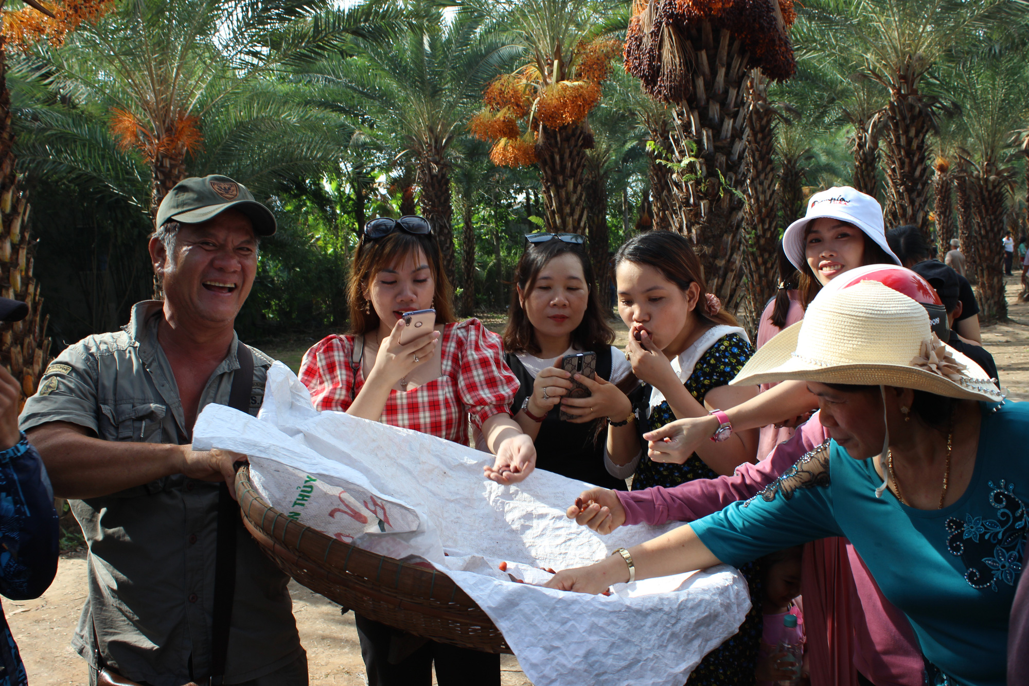 Visitors taste date palm fruits at a garden in Sa Dec City, Dong Thap Province, Vietnam. Photo: Thai Luy / Tuoi Tre