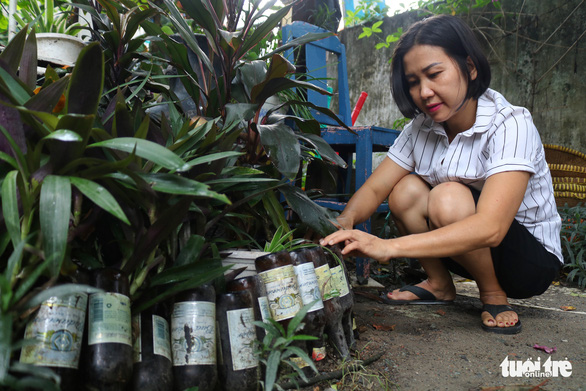 Thuy is growing a wall of greenery in old glass bottles she plucked from the street near her home in in Thu Duc District, Ho Chi Minh City, Vietnam. Photo: Ngoc Phuong / Tuoi Tre