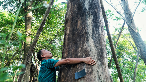 A man hugs a large trees abandoned at a vacant lot alongside over 100 other trees in Gia Lam District, Hanoi in this undated photo. Photo: Mai Thuong / Tuoi Tre