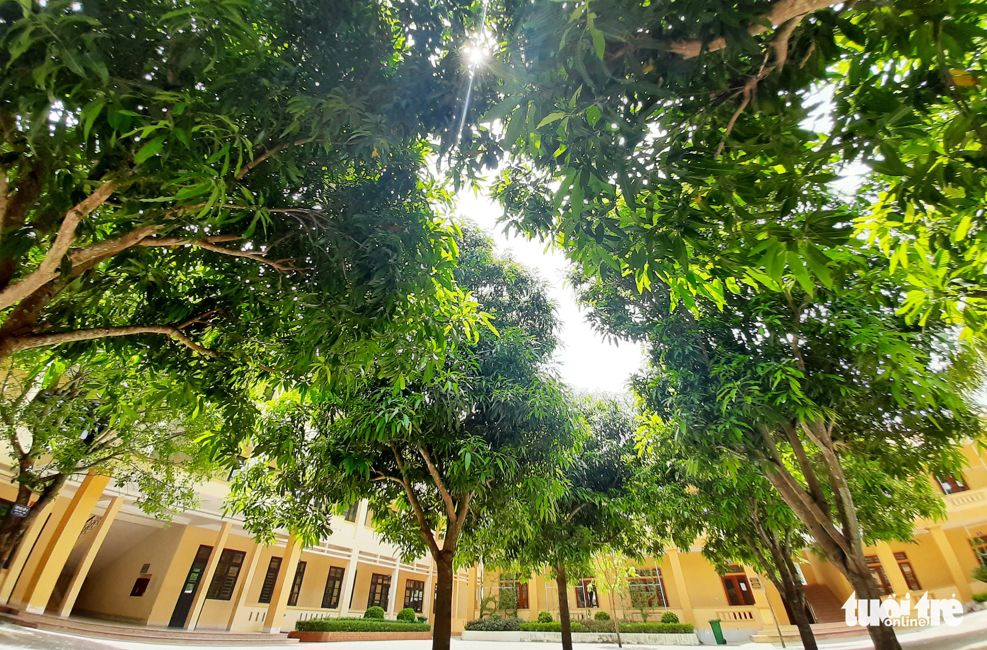 Green trees on the premises of Nam Dan 2 High School in Nghe An Province, Vietnam. Photo: Doan Hoa / Tuoi Tre