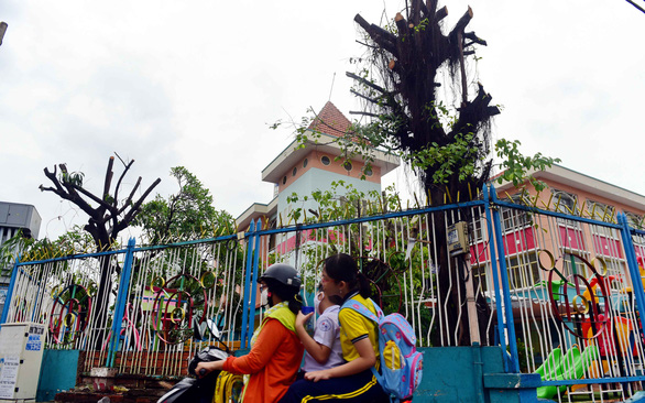 Huong Sen Preschool in Ho Chi Minh City's Phu Nhuan District was one of the many schools that have their trees pruned. Photo: Quang Dinh/ Tuoi Tre