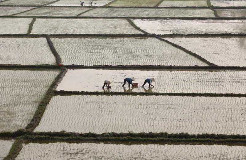 Vietnam Jan-May rice exports up 12.2% y/y to 3.09 mln tonnes: customs
