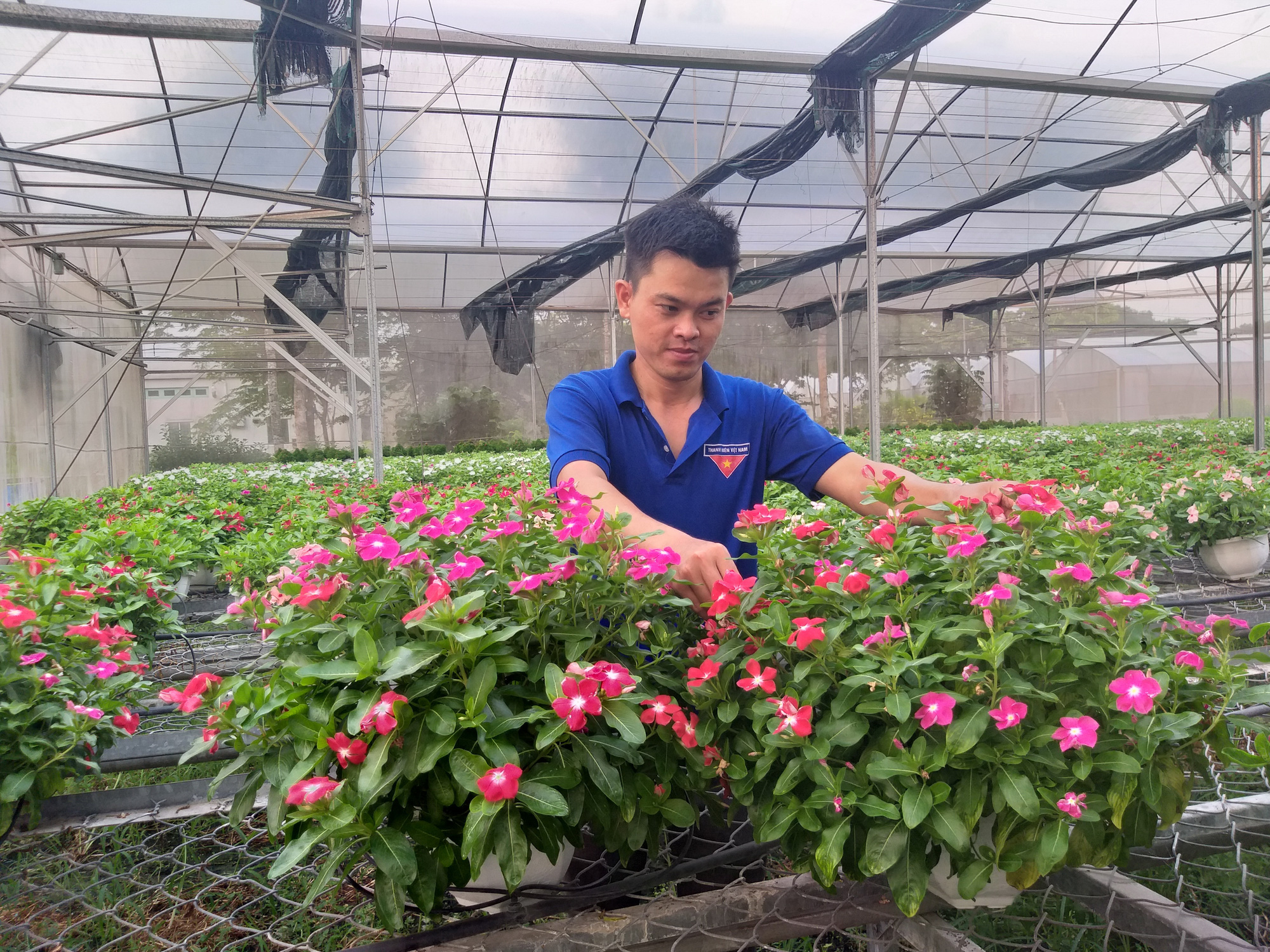 Agriculturalist pushes hi-tech farming in Vietnam to limits