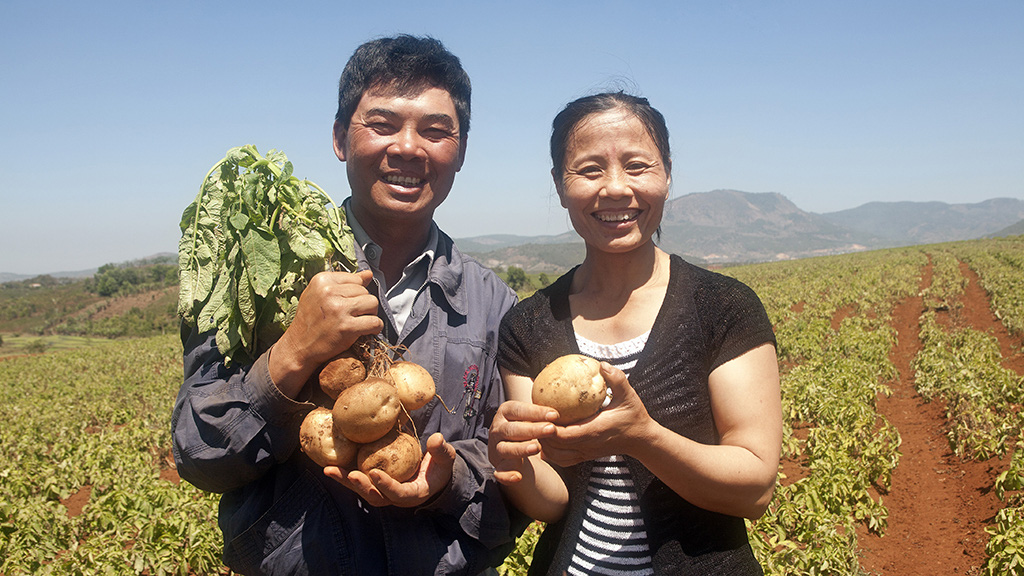 Farmers who take part in Nguyen Ngoc Tuan's potato networking program to supply for processing plants are happy with their produce in Lam Dong Province in Vietnam's Central Highlands. Photo: Mai Vinh / Tuoi Tre