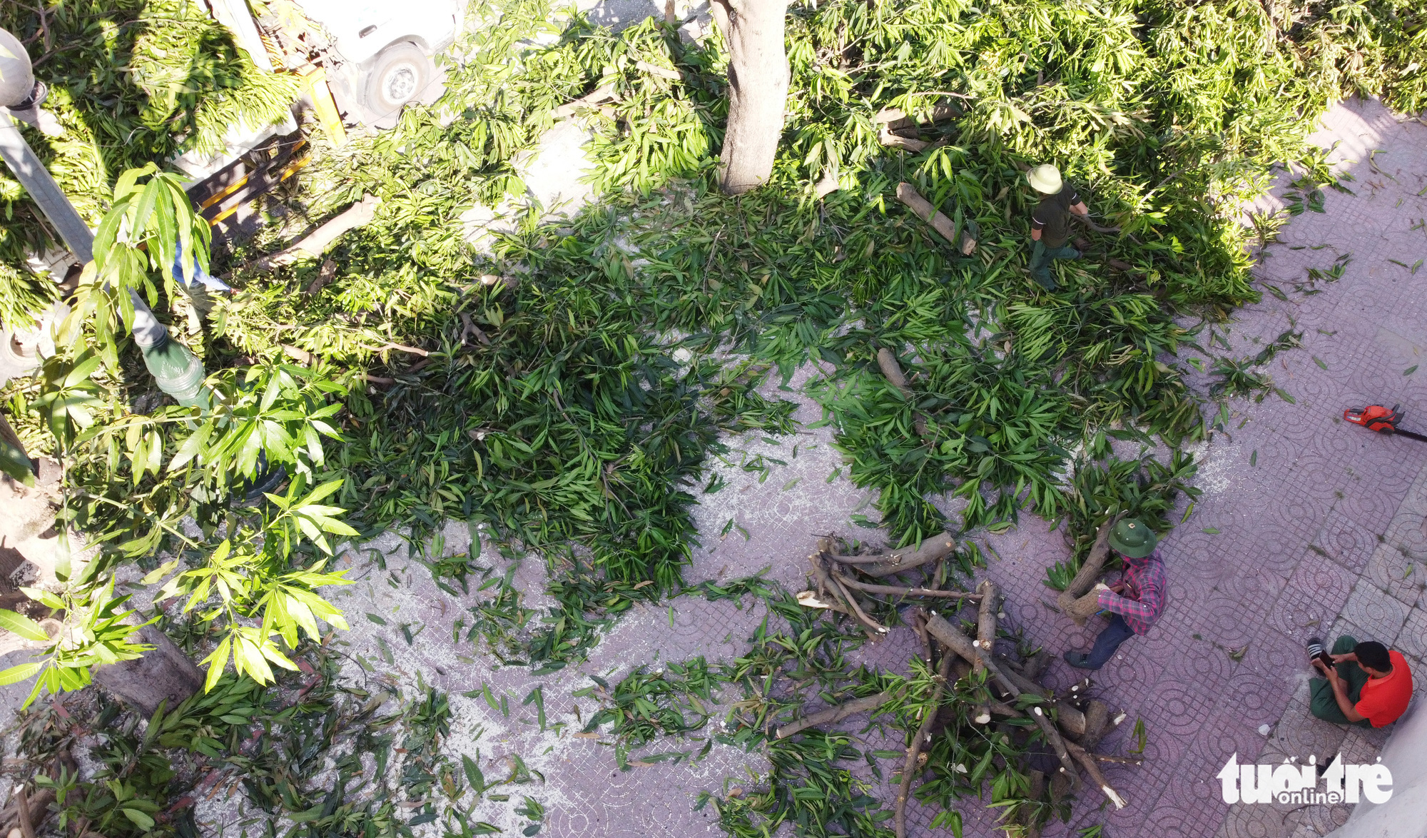 Sidewalks of Vinh City are strewn with mango tree branches after tree trimming in Vinh City, Nghe An Province, Vietnam. Photo: Doan Hoa / Tuoi Tre