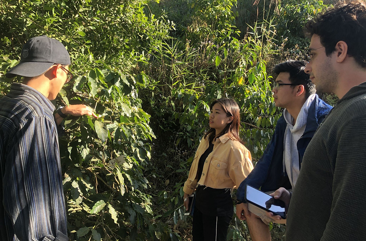 Foreigners and Vietnamese citizens visit Nguyen Van Son's specialty coffee plantation in Da Lat City, Lam Dong Province in a photo taken in 2020. Photo: Hong Van / Tuoi Tre News