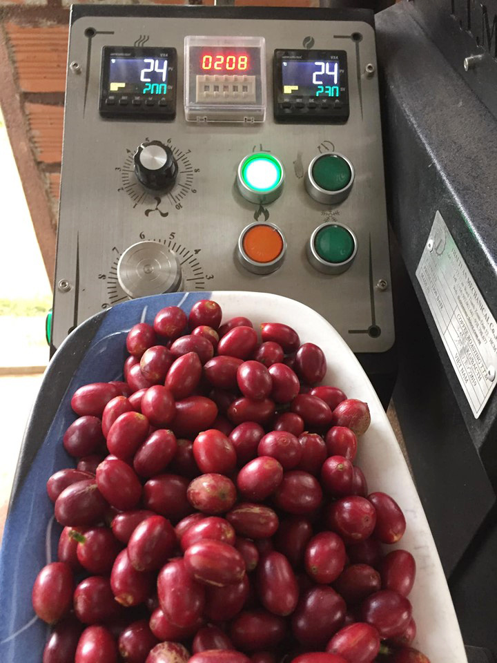 Pacamara coffee cherries harvested from Nguyen Van Son's specialty coffee plantation are weighed in a supplied photo.