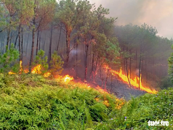 A pine forest is engulfed in flames in Nghe An Province, Vietnam. Photo: Huu Tan / Tuoi Tre