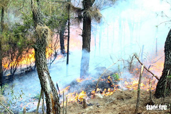 A fire destroyed over 50ha of forest in Nghe An Province, Vietnam. Photo: Doan Hoa / Tuoi Tre