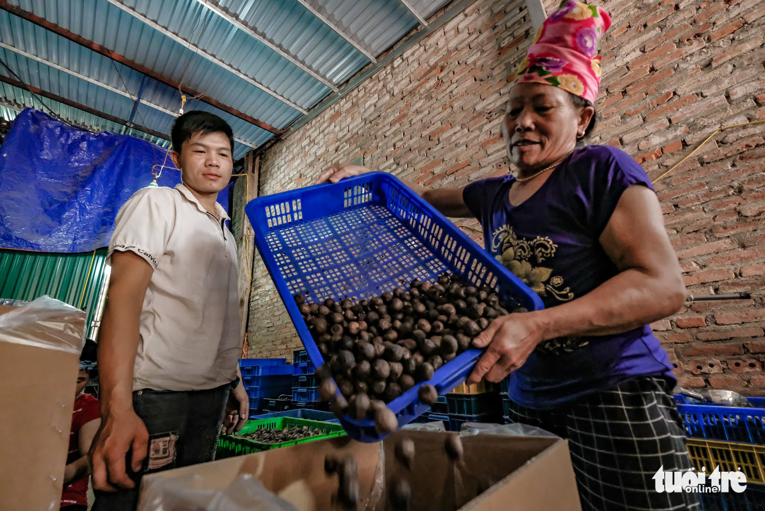 A Thai ethnic worker (right) handles garlic in this photo taken at a black garlic manufacturing workshop in Son La Province, Vietnam. Photo: Nam Tran / Tuoi Tre