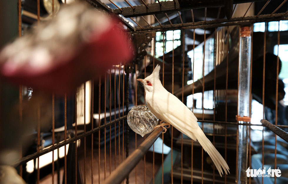 This white-whiskered bulbul in the collection of Duong Van Chuong is valued over US$21,500. Photo: Ha Thanh / Tuoi Tre