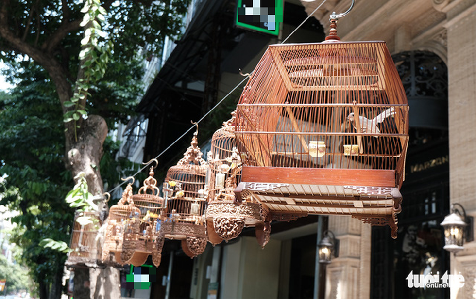 Caged ornamental birds are raised at Duong Van Chuong's residence in Hanoi. Photo: Ha Thanh / Tuoi Tre