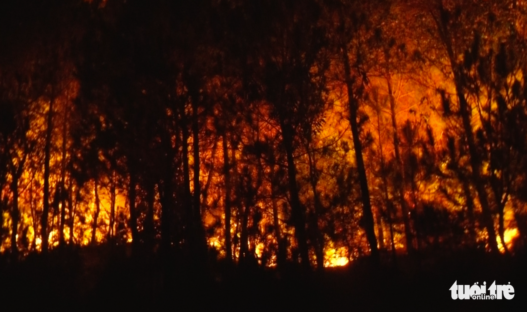 A fire breaks out at a forest in Nghe An Province, Vietnam, June 29, 2020. Photo: Doan Hoa / Tuoi Tre