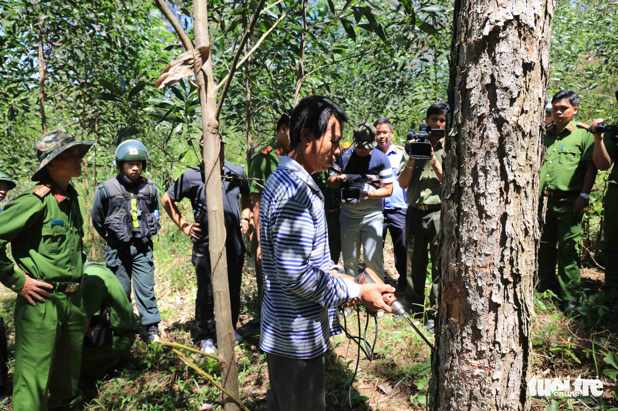 Duong Van Hong shows police officers how he had poisoned the pine trees in Lam Dong Province, Vietnam. Photo: M.V. / Tuoi Tre