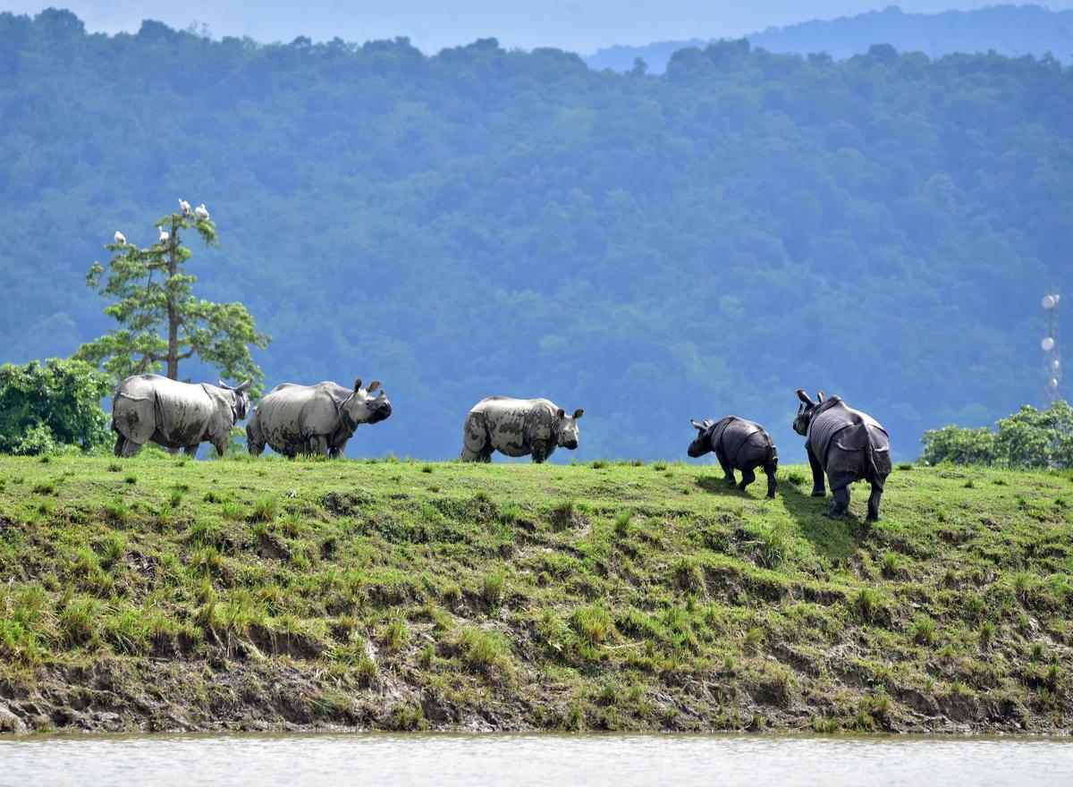 Floods kill scores in India's tea-growing Assam; nine rhinos drown