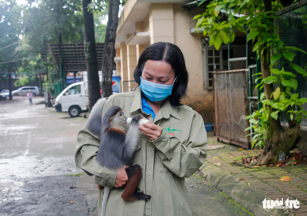 Saigon Zoo staff donates 30% of salary to buy foods for animals amid COVID-19