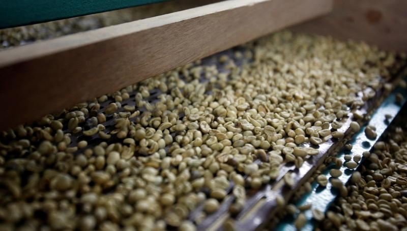 Vietnam's Jan-Sept coffee exports drop 1.4%, rice down 0.6%