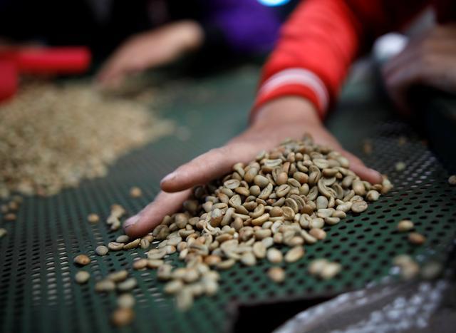 Vietnam coffee market subdued ahead of main harvest in upcoming weeks
