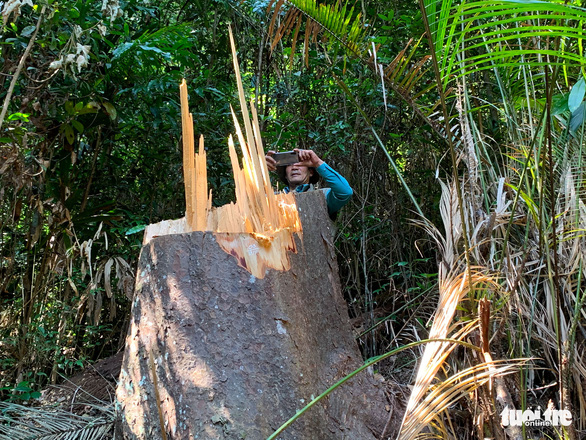 Wood products discovered at forest ranger's house after illegal logging in Vietnam's Central Highlands