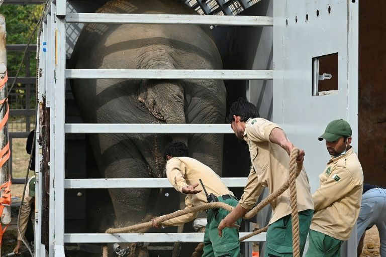 Cher welcomes 'world's loneliest elephant' to new home in Cambodia