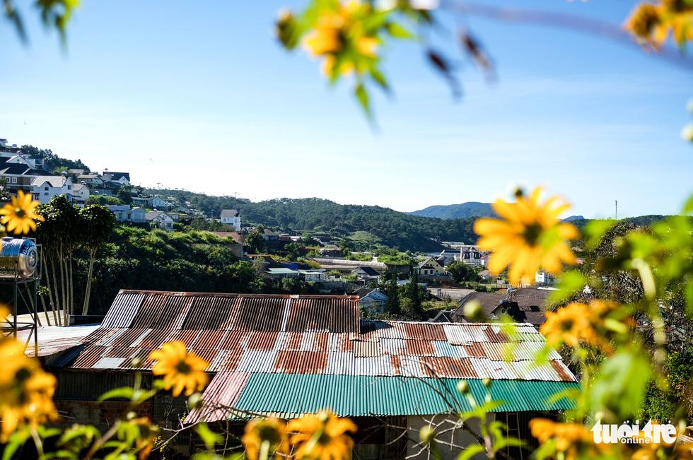 Wild sunflower season fascinates tourists in Vietnam's Central Highlands