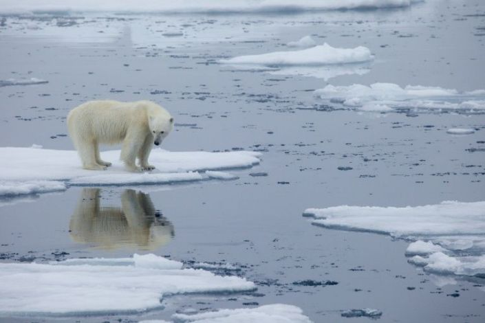Arctic endured one of its hottest years in 2020: study