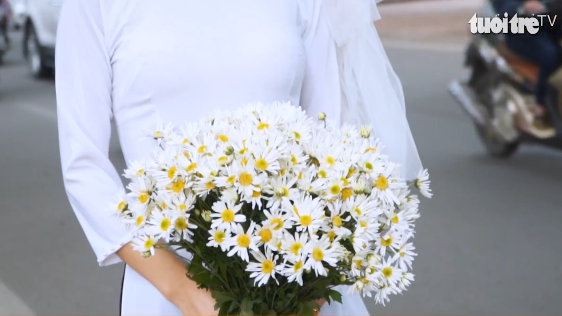 Hanoi's streets are covered by pure white daisies