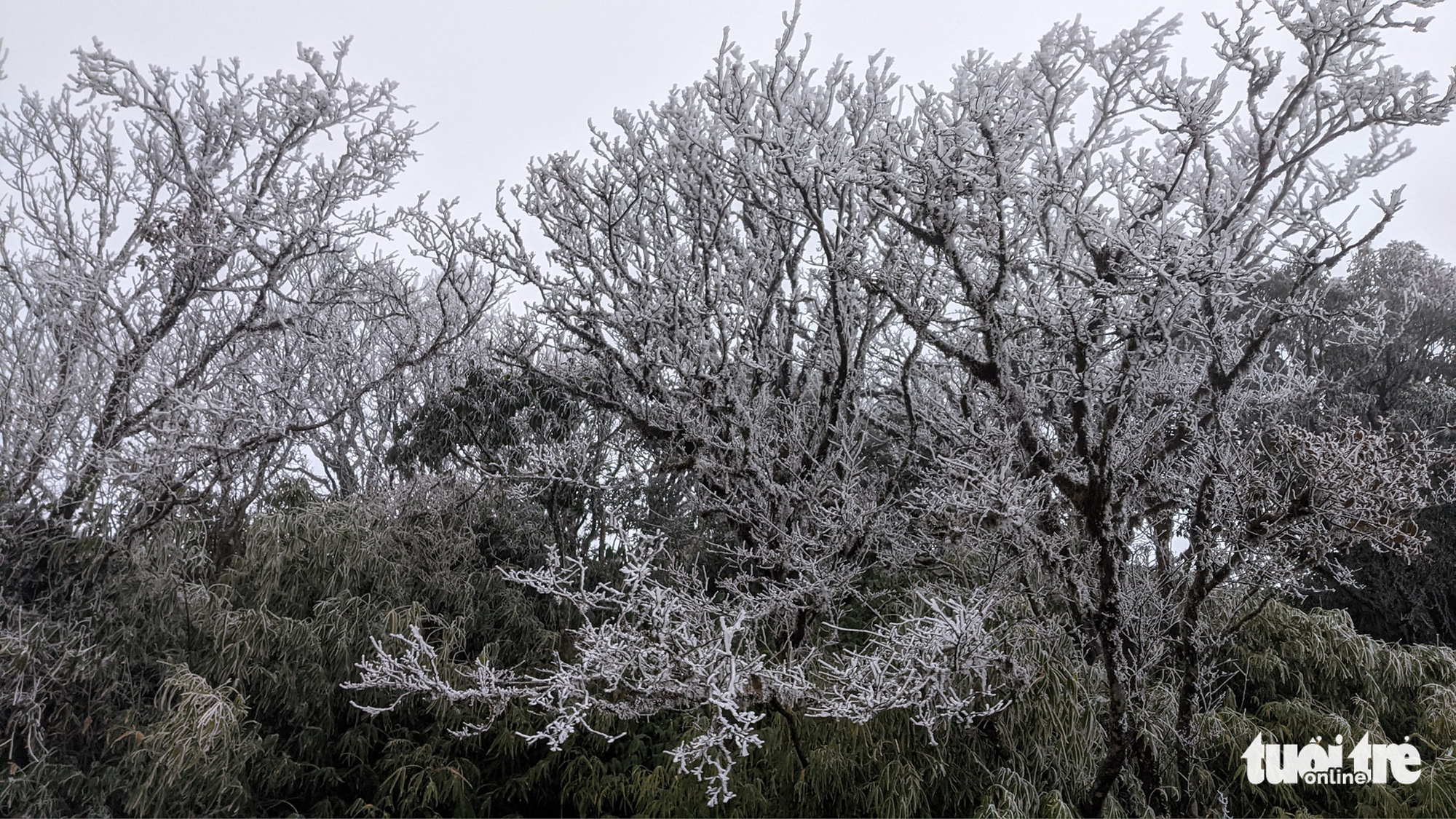 Frost covers northern Vietnamese mountains as temperature dips below 0 degrees Celsius