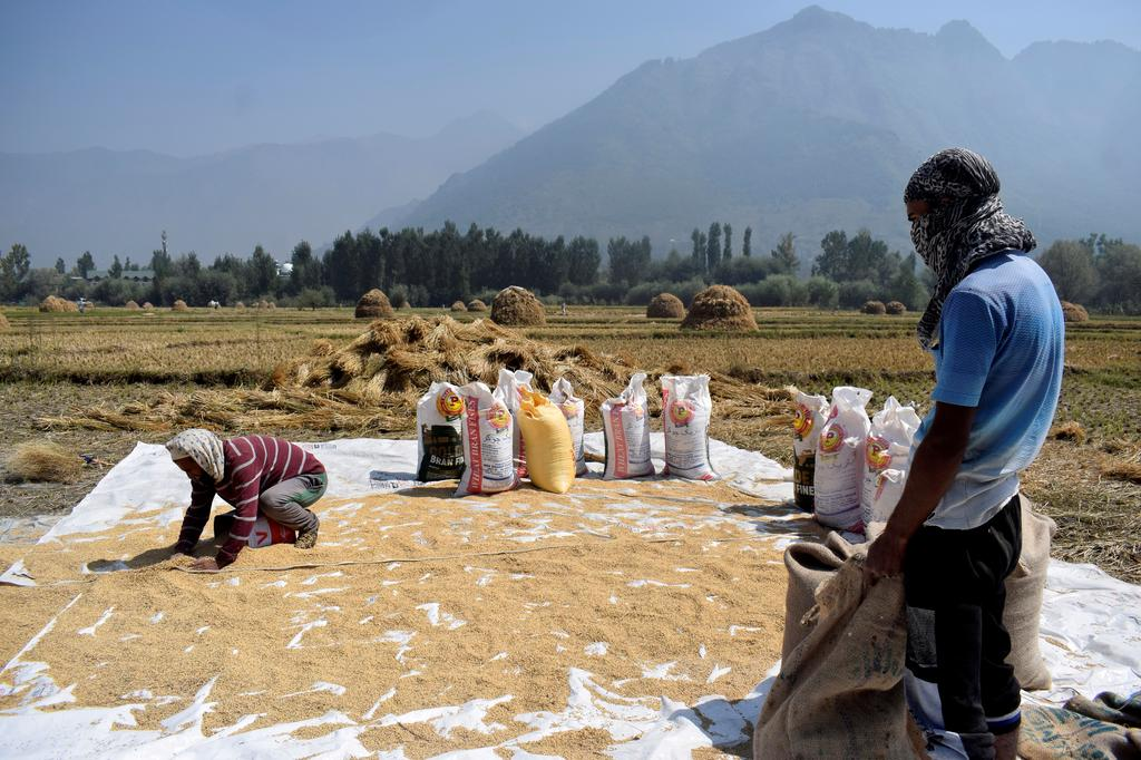 Asia rice - Indian prices rise; high Thai rates stoke competition worries