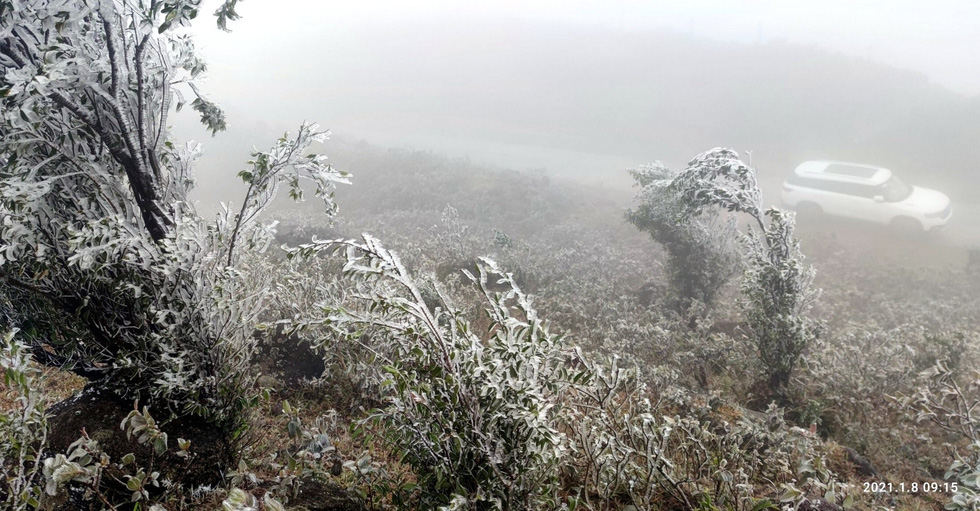 Frost forms on tree branches on Mount Cao Ly in the northern province Quang Ninh, January 8, 2021. Photo: Ly Cuong/ Tuoi Tre
