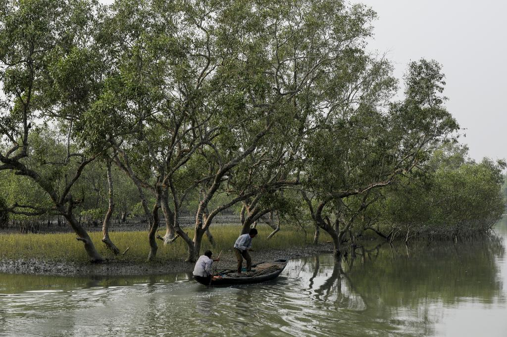 Men on a boat row past mangrove trees encircling the island of Satjelia in the Sundarbans, India, December 15, 2019. Photo: Reuters