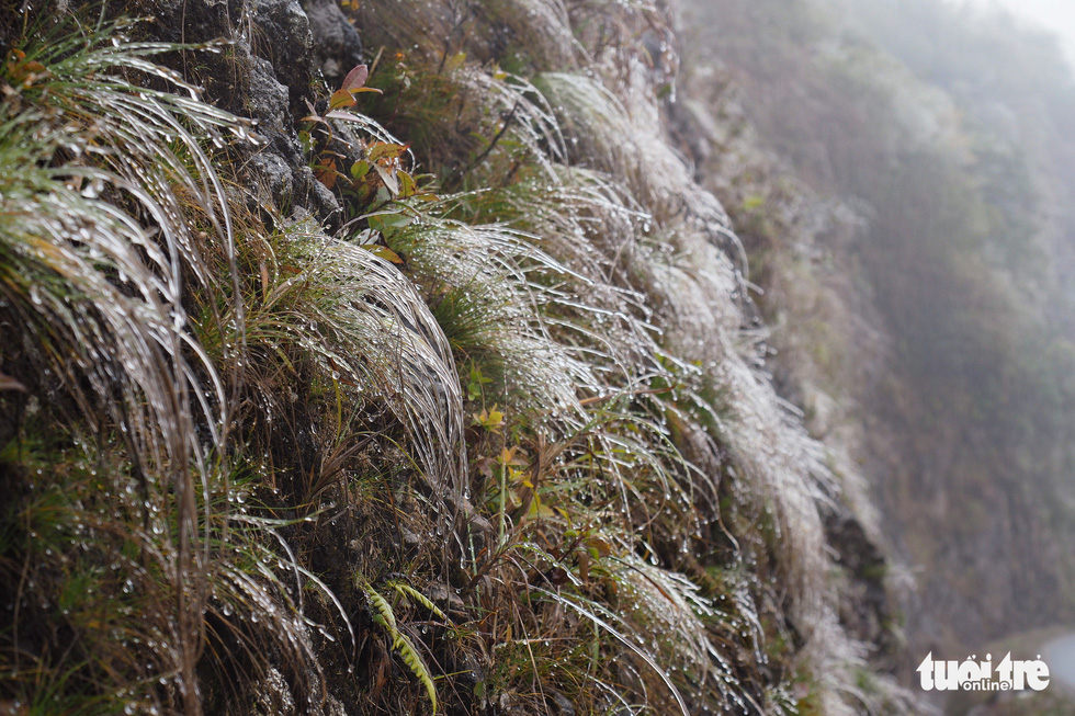 Frost covers grass on the O Quy Ho Pass in the northern province Lao Cai, January 9, 2021. Photo: Vu Tuan / Tuoi Tre