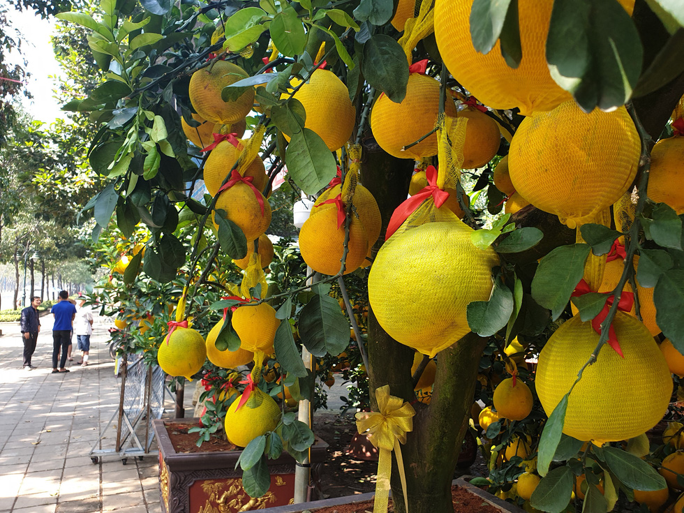 Grapefruit trees are put up for sale on the sidewalk of Mai Chi Tho Street in District 2, Ho Chi Minh City, January 2021. Photo: N.Tri / Tuoi Tre