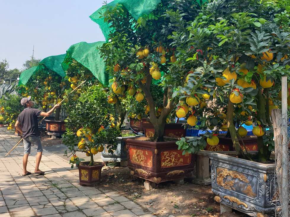 A man takes care of salable grapefruit trees on the sidewalk of Mai Chi Tho Street in District 2, Ho Chi Minh City, January 2021. Photo: N.Tri / Tuoi Tre