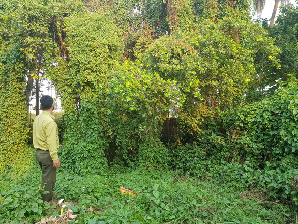 A forest ranger of Ho Chi Minh City visits a gathering location of monkeys in District 12 of Ho Chi Minh City. Photo: Ngoc Khai / Tuoi Tre