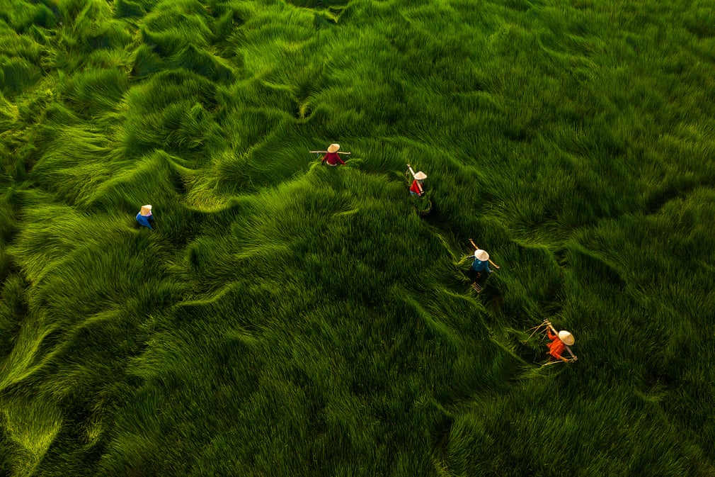 The photo titled 'Harvesting Grass' by Vietnamese photographer Khanh Phan ranked third in the 'People' category's 'Daily Life' topic at the 2020 Aerial Photography Awards.