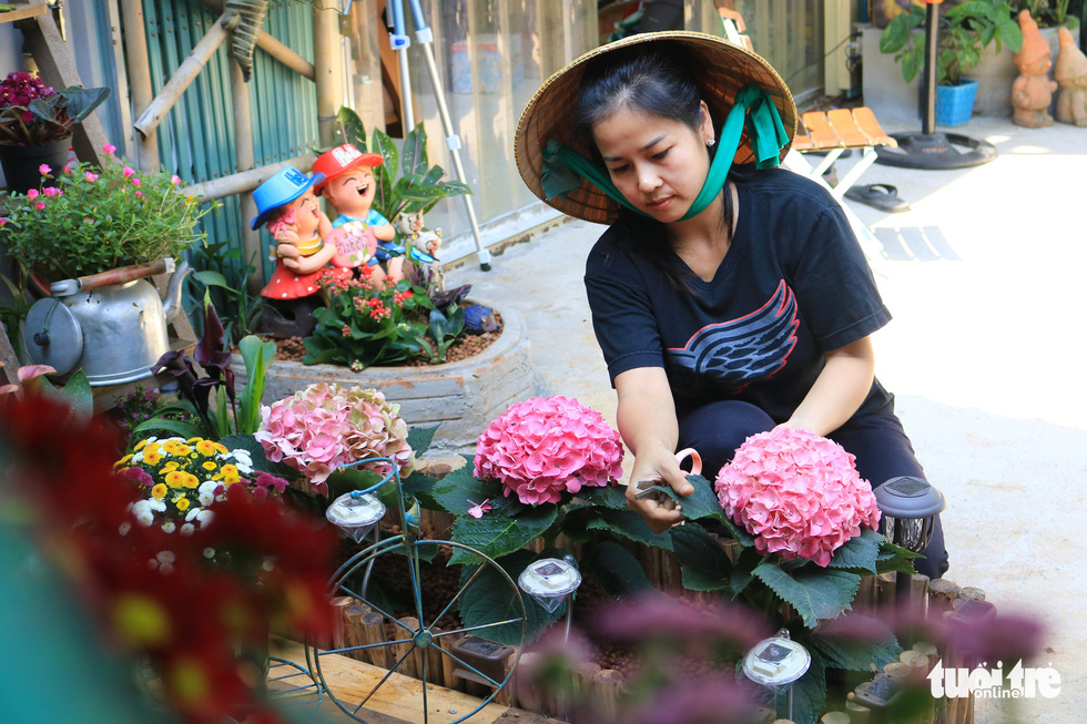 Nhu Ngoc takes care of a hydrangea plant in her garden. Photo: Nhat Thinh / Tuoi Tre