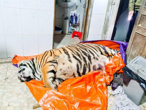 In Vietnam, man caught housing 250kg tiger