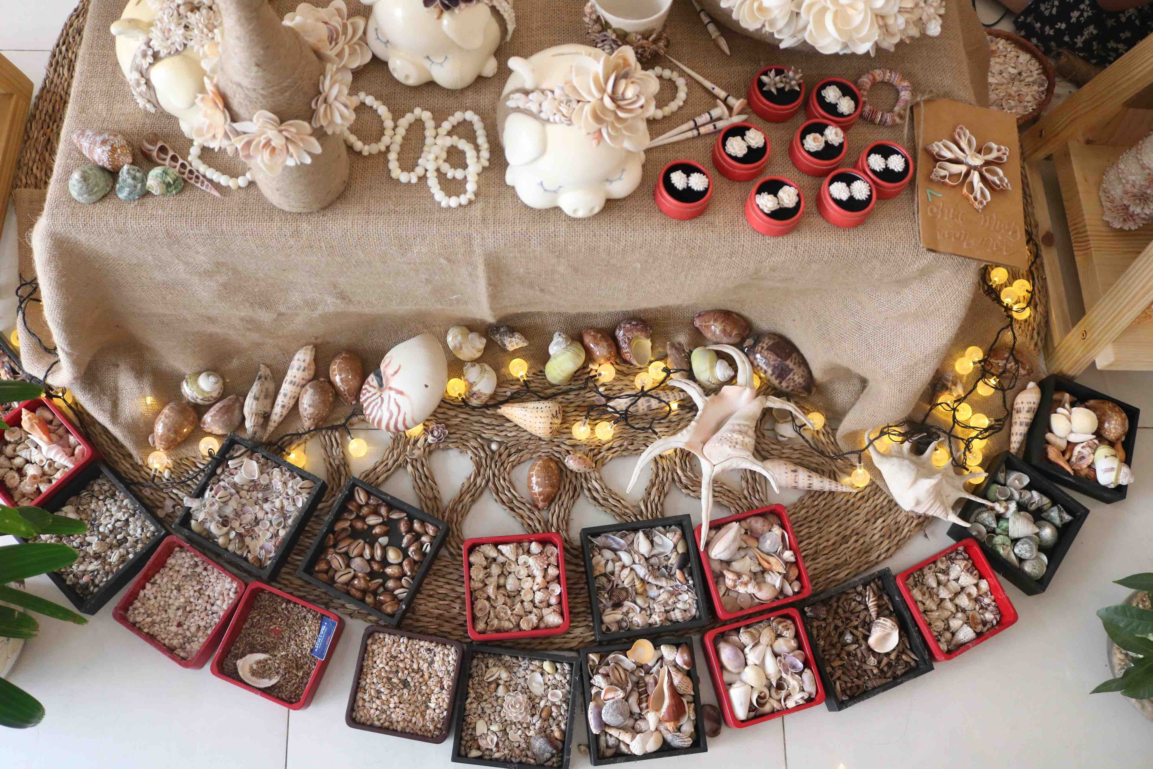 Different types of shells are seen at Tran Thi Ngoc Hieu's showroom in District 1, Ho Chi Minh City. Photo: Hoang An / Tuoi Tre